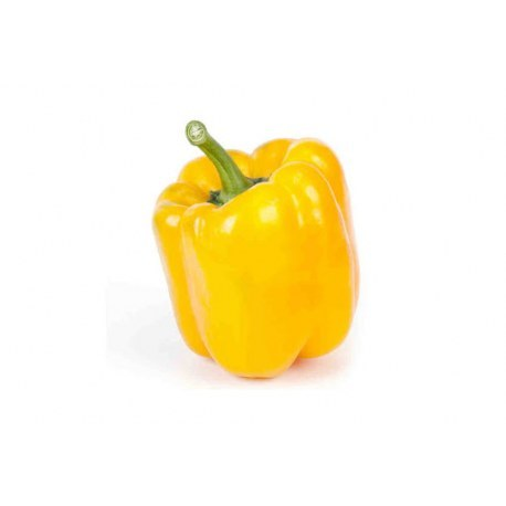 Papryka żółta 1 sztuk